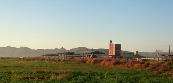 DeZeekoe farm living Di Brown