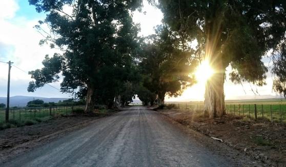 DeZeekoe road Di Brown