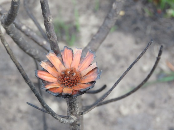 flower Di Brown