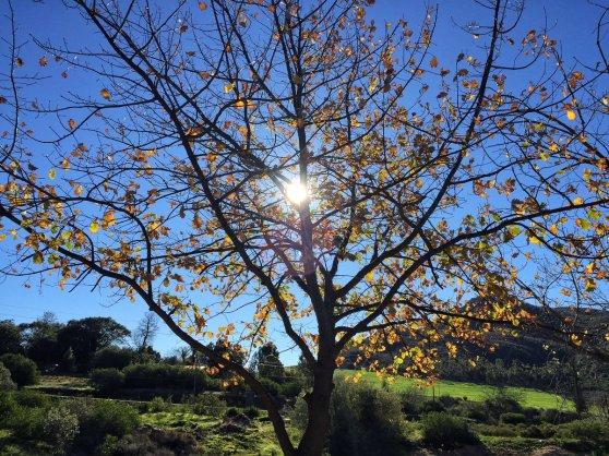 Trees in winter Piekenierskloof Di Brown